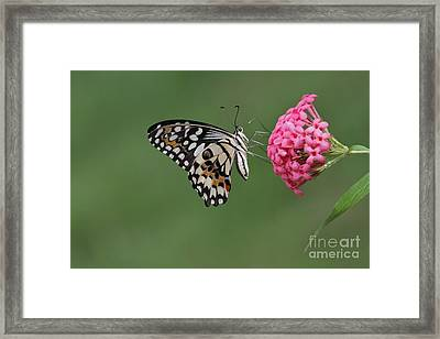 Natures Perfections Framed Print by Gary Bridger