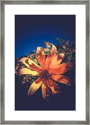 Nature's Pin Wheel  Framed Print