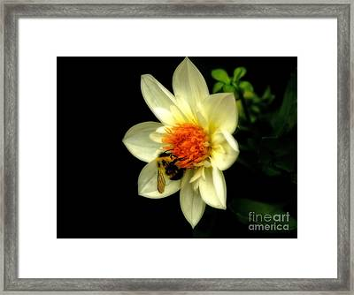 Natures Pollinator Framed Print by Inspired Nature Photography Fine Art Photography