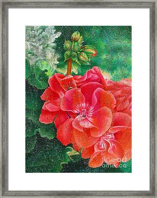 Nature's Jewels Framed Print by Pamela Clements