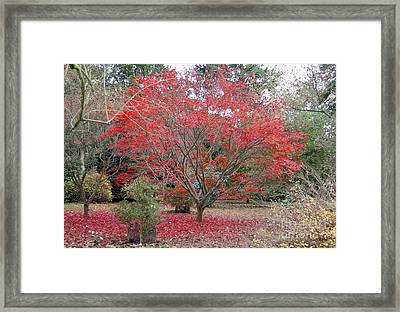 Framed Print featuring the photograph Nature's Red by Linda Prewer