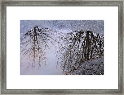 Framed Print featuring the photograph Nature's Reflection  by Candice Trimble