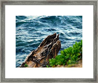 Natures Sculptures Vii Framed Print by Patricia Griffin Brett