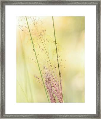 Natures Serenity Framed Print by Camille Lopez