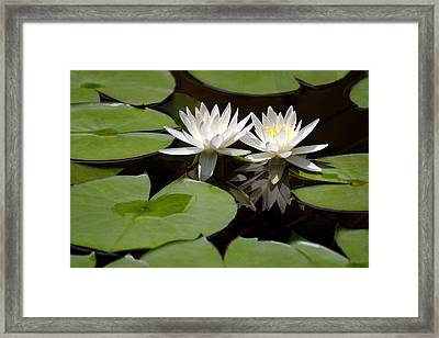 Nature's Snow White Water Lilies Framed Print by Linda Phelps
