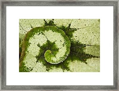 Natures Spiral Framed Print
