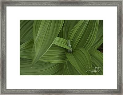 Natures Splendor  Framed Print by Alana Ranney