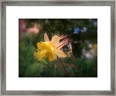 Natures Star Framed Print by Heather L Wright