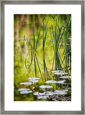 Natures Stillness Framed Print