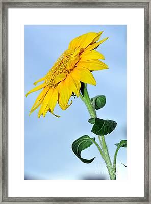 Nature's Sunshine Framed Print by Kaye Menner