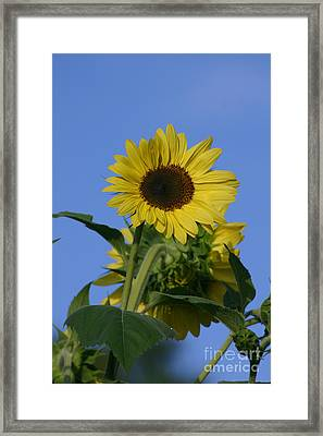 Nature's Sunshine Framed Print