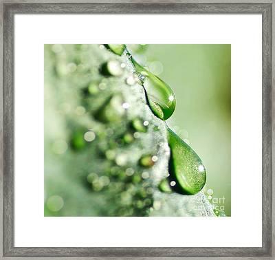 Nature's Teardrops Framed Print by Kaye Menner