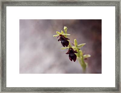 Natures Trick - Mimicry Framed Print