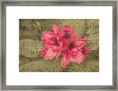 Nature's Tune Framed Print