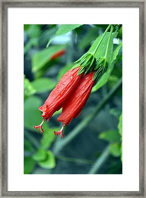 Nature's Twosome Framed Print by Bliss Of Art