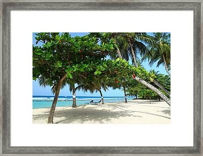 Natures Umbrella Tree Framed Print