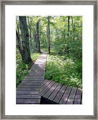 Nature's Walkway Framed Print by Mary Lou Chmura