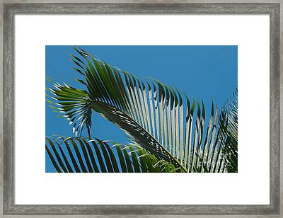 Nature's Wardrobe Framed Print by Sharon Mau