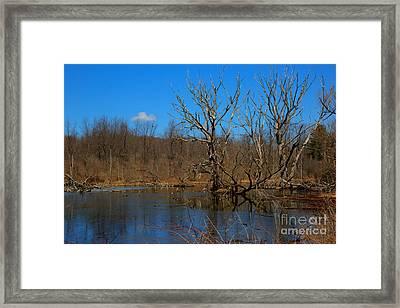 Nature's Wasteland Framed Print