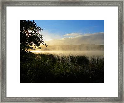 Framed Print featuring the photograph Nature's Way by Dianne Cowen