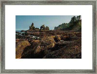 Natures Way Framed Print