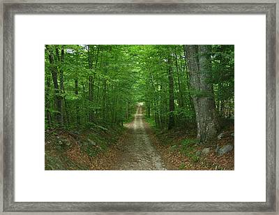 Framed Print featuring the photograph Nature's Way At James L. Goodwin State Forest  by Neal Eslinger