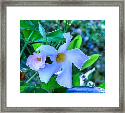 Flower 14 Framed Print