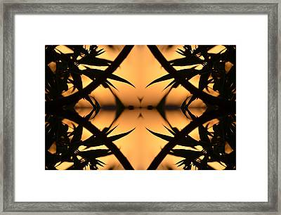 Nature's Window Of Opportunity Framed Print