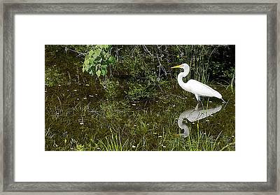 Naturescape 54a Framed Print by Otri Park