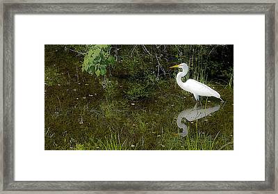 Naturescape 54b Framed Print by Otri Park