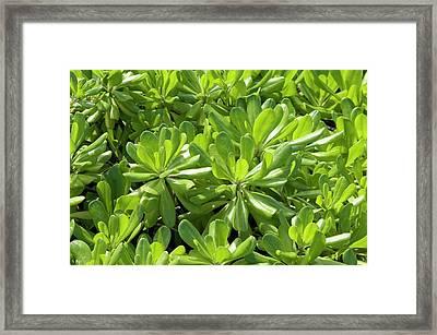 Naupaka Foliage Framed Print