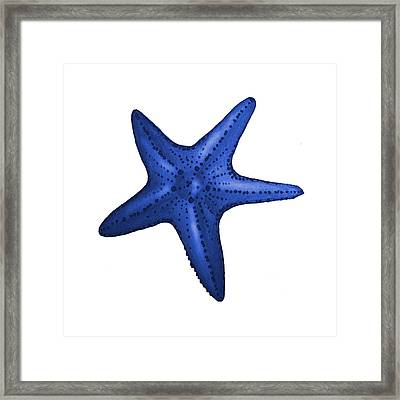 Nautical Blue Starfish Framed Print by Michelle Eshleman