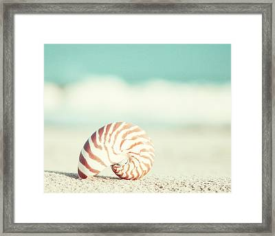 Nautilus Framed Print by Carolyn Cochrane