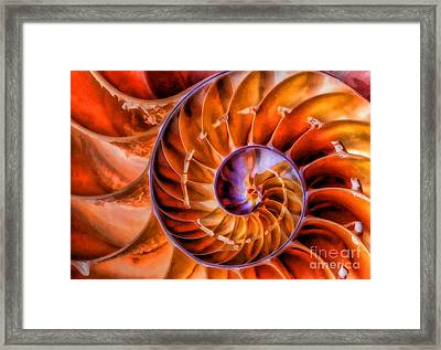 Framed Print featuring the photograph Nautilus by Clare VanderVeen
