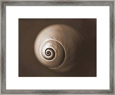 Nautilus In Sepia Framed Print by Deborah Smith