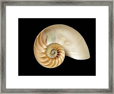 Nautilus Pompilius Framed Print