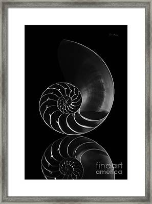 Nautilus Reflection Framed Print by Eyzen M Kim