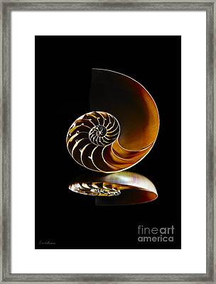 Nautilus Reflection II Framed Print by Eyzen M Kim