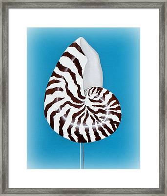 Nautilus Sea Shell Framed Print by Karyn Robinson