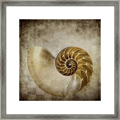 Nautilus Shell Framed Print by Carol Leigh