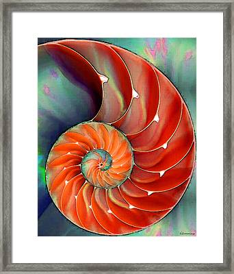 Nautilus Shell - Nature's Perfection Framed Print by Sharon Cummings