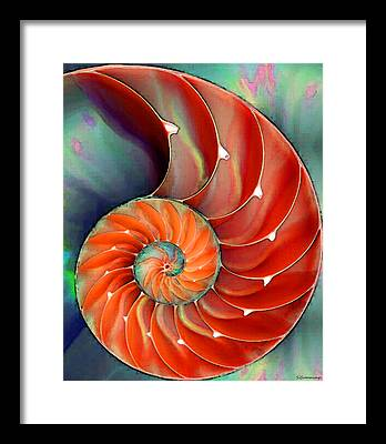 Nautilus Framed Prints