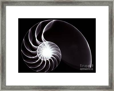 Nautilus Shell Xray Framed Print by Spl