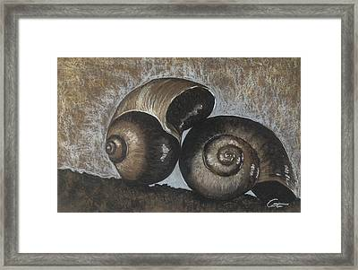Nautilus Shells In Sepia Framed Print