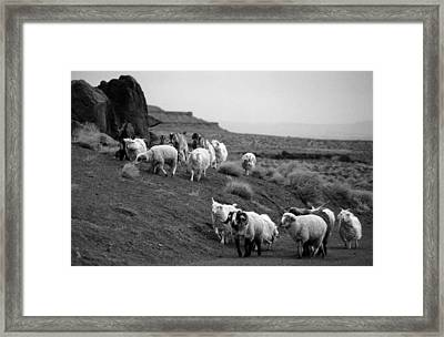 Navajo Sheep Framed Print by Robert Lozen