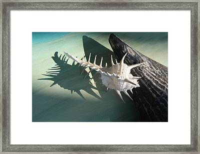 Near And Far Framed Print by Paulette Maffucci