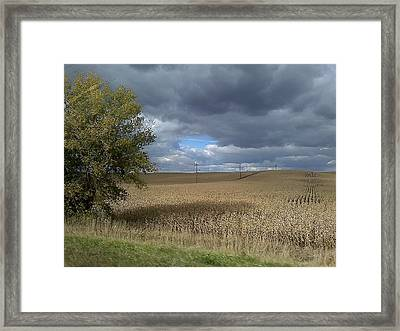 Nebraska Cornfield Framed Print by Lea Wiggins
