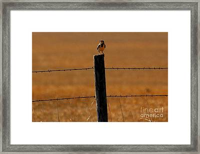 Nebraska's Bird Framed Print by Elizabeth Winter
