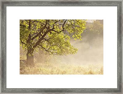 Nebulous Tree Framed Print by Heiko Koehrer-Wagner