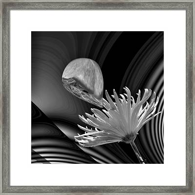 Nectar Of The Gods Bw Framed Print by Barbara St Jean